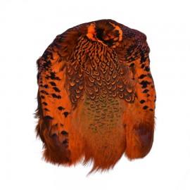 Faisan à Collier - Peau Complète (Teint Orange)