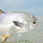 Bonefish/Permit